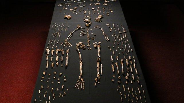 human fosils